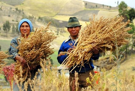 "According to the NYTimes article, ""When NASA scientists were searching decades ago for an ideal food for long-term human space missions, they came across an Andean plant called quinoa. With an exceptional balance of amino acids, quinoa, they declared, is virtually unrivaled in the plant or animal kingdom for its life-sustaining nutrients. (Courtesy photo -- edu.only)"