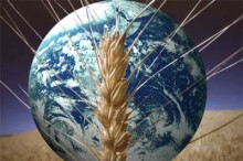 Will it be enough food for the world (WPP photo archive)