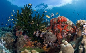 Ocean health is our health (Courtesy photo for education only)