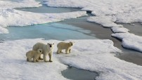 Climate change in Arctic (Facebook photo for education only)