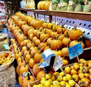 Food for all - pumpkins in New York Photo by Erol Avdovic 2020)